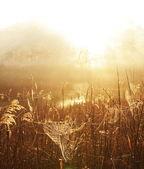 雾湖 — 图库照片