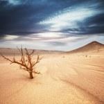 Desert — Stock Photo #4335081