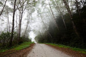 Fog in forest — Stockfoto