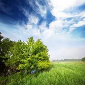 Albero nel campo — Foto Stock