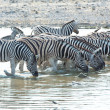 Zebras in Etosha — Stock Photo #4441295