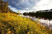 Lato łąka — Zdjęcie stockowe