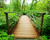 Boardwalk in green forest — Stock Photo