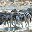 Stock Photo: Zebras on waterhole