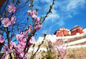 Templo de potala en lhasa, tíbet — Foto de Stock