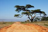 Paesaggi africani — Foto Stock