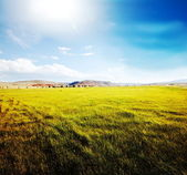 Field and blue — Stock Photo
