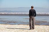 Men looking on flamingo — Stock Photo