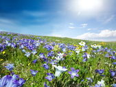 Mountains meadow — Stock Photo