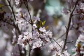 Весенний сад — Стоковое фото