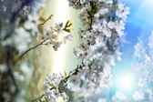 Jardin de printemps — Photo