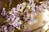 Blossoming garden — Stock Photo