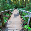 Footpath in redwood forest — ストック写真