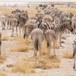 Zebras in Etosha — Stock Photo #4595180