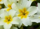Blommor närbild — Stockfoto