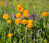 Flowers on meadow — Stock Photo