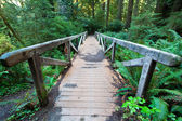 Footpath in redwood forest — Stock Photo