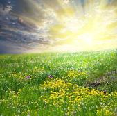 Meadow on sunrise — Stockfoto