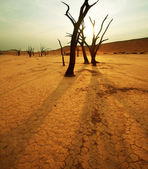 Namib desert at dawn — Stock Photo