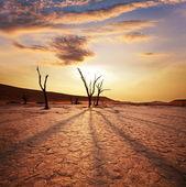在纳米比亚死亡谷 — 图库照片