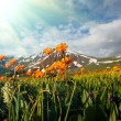 Meadow in Altai Mountains — Stock Photo