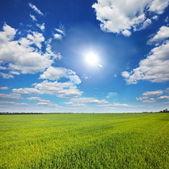 поле и облака — Стоковое фото