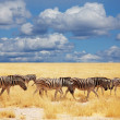 Zebras in Etosha — Stock Photo #4649934