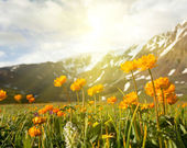 Mountains meadow — Stockfoto