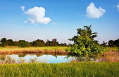 夏の湖 — ストック写真