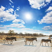 Zebras in Etosha — Photo