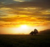 Meadow at dawn — Stock Photo