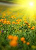 Sunny meadow — Стоковое фото