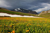 Mountain meadow — Foto Stock