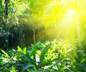 Sunny jungle — Stock Photo