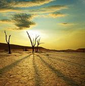 纳米布沙漠。在纳米比亚死亡谷 — 图库照片