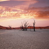 Namib desert — Stock Photo