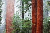 Seqoiya National Park in USA — Stock Photo