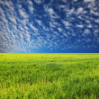 Stock Photo: Grassland and sky