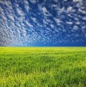 Użytki zielone i niebo — Zdjęcie stockowe