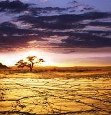Namib woestijn — Stockfoto