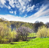 Grassland at spring — Stock Photo