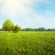 Stock Photo: Grassland in sunlight