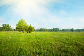 Grassland in sunlight — Stock Photo