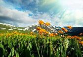 łąka w górach — Zdjęcie stockowe