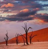 Martwa dolina w namibii — Zdjęcie stockowe