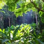 Rain jungle — Stock Photo