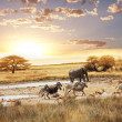 Stock Photo: Safari in Namibia