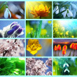 Flowers collage — Stock Photo #5280308