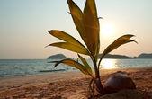 Andaman sea — Stockfoto
