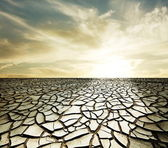 Drought land — Stock Photo